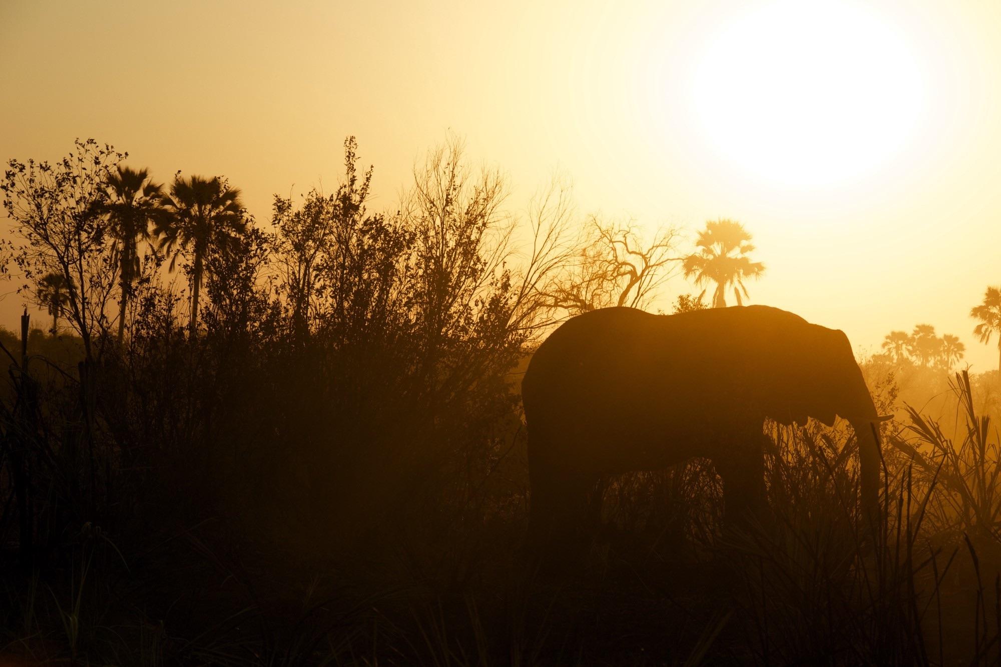 Elephants in Class